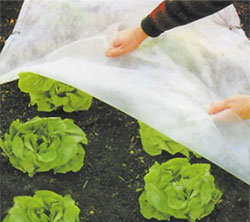 Garden Fleece will give much needed protection to sensitive plants from frost damage.