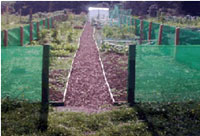 Windbreak and Shade netting protects plants and shrubs from wind and sun damage